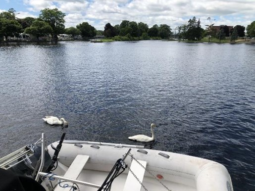 2002 Carver boat for sale, model of the boat is 396 Motor Yacht & Image # 19 of 26